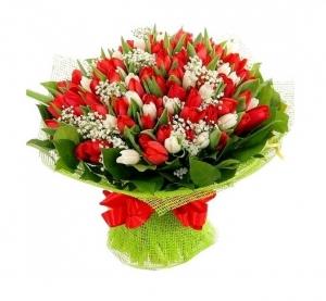 Raudonai baltos tulpės - Gėlės į namus Vilniuje