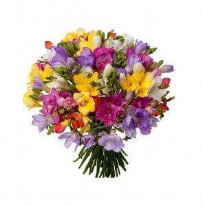 Frezijos - Gėlių pristatymas į namus Utenoje