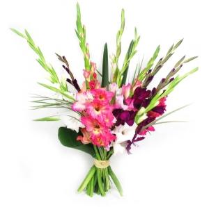 Gladiolės mix (Kardeliai) - Gėlių fėja - Gėlių pristatymas į namus