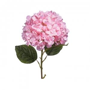 Hortenzija rožinė - Gėlių pristatymas į namus Klaipėdoje