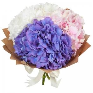 Hortenzijos Mix - Gėlių pristatymas į namus Klaipėdoje