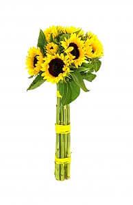 Saulėgrąžos - Gėlių pristatymas į namus Ukmergėje