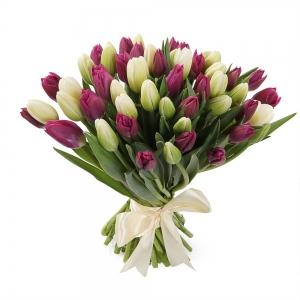 Violetinės ir baltos tulpės